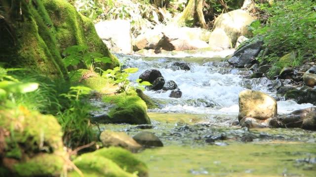 風光明媚な日本の森のクレアーウォーター川流れ - 清らか点の映像素材/bロール