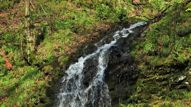 日本の景観の森の川流れ - 清らか点の映像素材/bロール