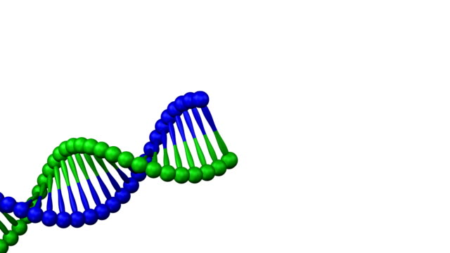 Creation of a DNA molecule. video