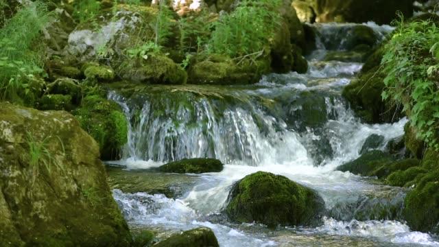 creek cascade in forest - источник стоковые видео и кадры b-roll