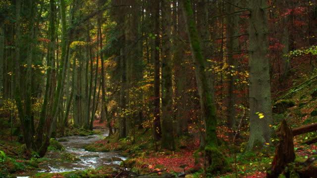 Bach fließt in idyllischen Herbst Wald – Video