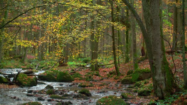 Creek Flowing in Idyllic Autumn Forest