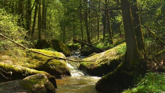 Creek Flowing im idyllischen Frühlingswald – Video