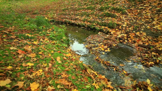 Creek in autumn forest. Full HD with motorized slider. 1080p video