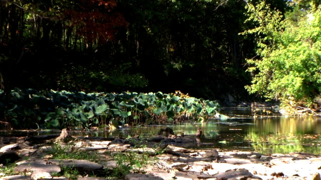 Creek in Early Autumn Zoom Out (NTSC_link_below) video