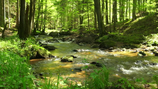 Creek In Spring Forest Dolly Shot video
