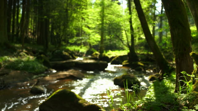 dolly creek in spring forest - ручей стоковые видео и кадры b-roll