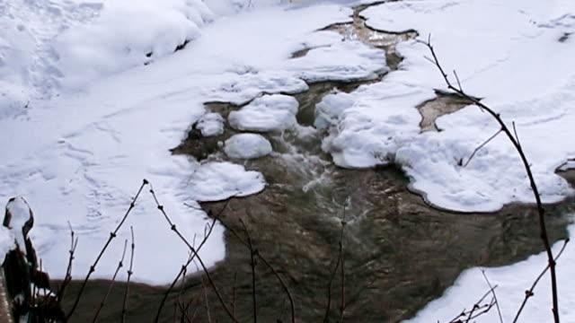 creek  - parte della pianta video stock e b–roll