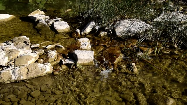 Creek with clear running water. The flow of water, twice delayed shooting.