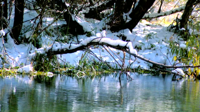 Creek with snow on hillside in background and trees video
