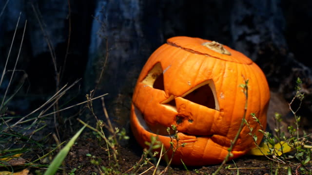 Creepy holiday pumpkin covered with mold near an old wooden stump is lit by a bright light that moves in different directions. Closeup of a jack-o-lantern with a lid lying in the grass cooked for Halloween. Food over production video