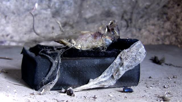 stockvideo's en b-roll-footage met griezelig scène. dood dier achter spider netto gordijn - dierlijk bot