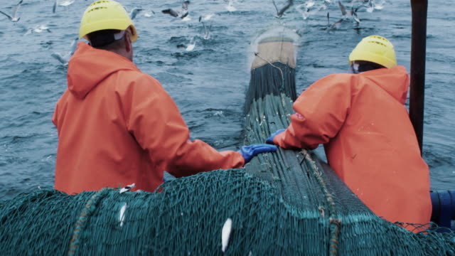 crew of fishermen work on commercial fishing ship that pulls trawl net - fishing video stock e b–roll