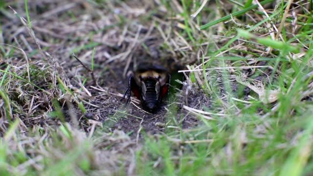 Cricket Grooming video