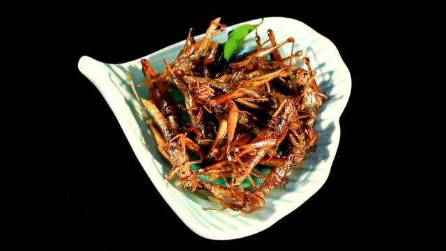crispy fried insects video