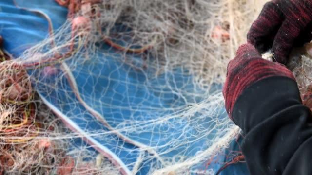 Croaker or Drum fish in fishing net video