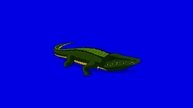 Crocodile Alligator Open his Mouth. Animated Motion Graphic Isolated on Blue Screen video