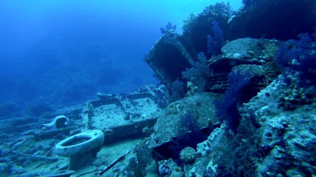 Crocodile fish in shipwreck