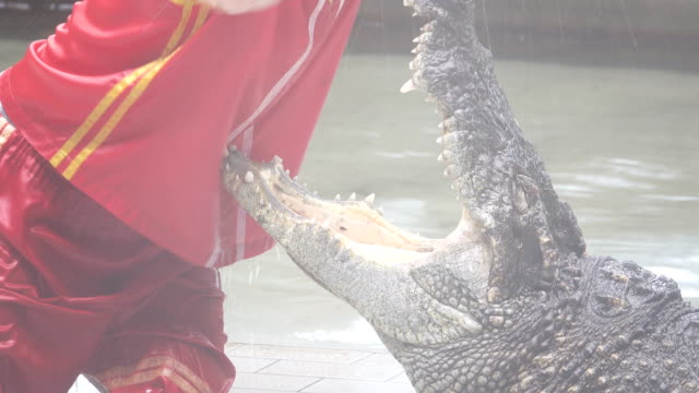 crocodile - wrestling stock videos and b-roll footage