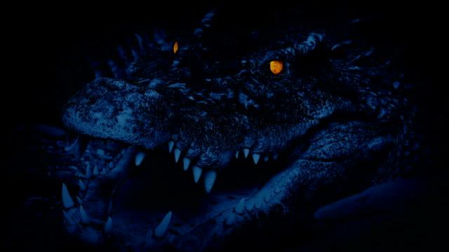 クロコダイルの夜光る目 - 動物園点の映像素材/bロール