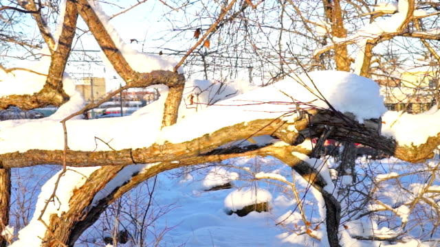 crooked baum ohne blätter in einem sonnigen wintertag, schieberegler aufnahme - verbogen stock-videos und b-roll-filmmaterial