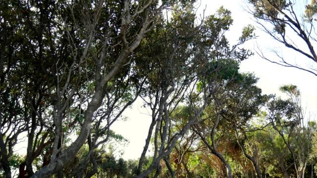 krumme bäume im wald. blumen und bäume - verbogen stock-videos und b-roll-filmmaterial