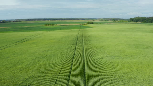Crop and agriculture concept; drone flying over field countryside at sunny cloudy spring time video