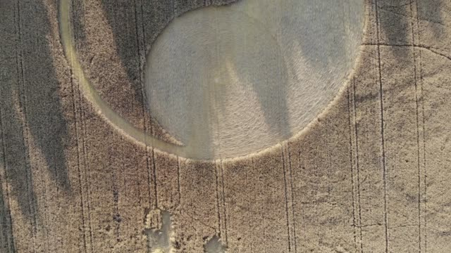 Crop circles from drone 4k Amazing view on crop circles at sunset, in summer. These circles appeared nearby in Wólka Orchowska - small village in central Poland yin yang symbol stock videos & royalty-free footage