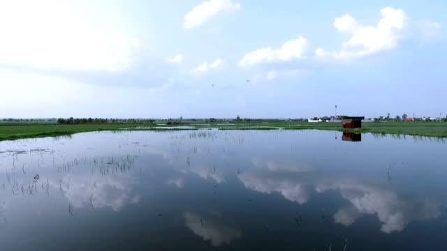 Crop during flood video