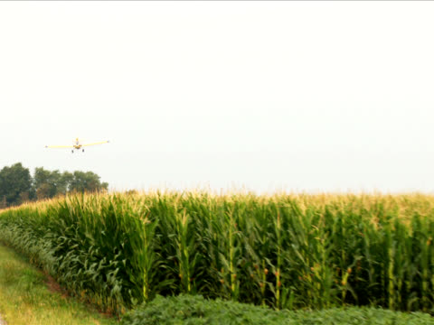 Crop Duster over corn fields 2 SD video