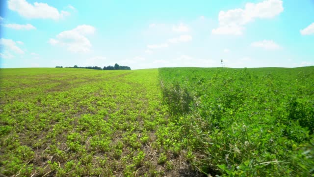 crop of alfalfa during harvest in the late summer - erba medica video stock e b–roll