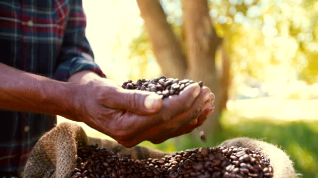 raccolto di chicchi di caffè dal farm, arrosto e pronto - coffee farmer video stock e b–roll