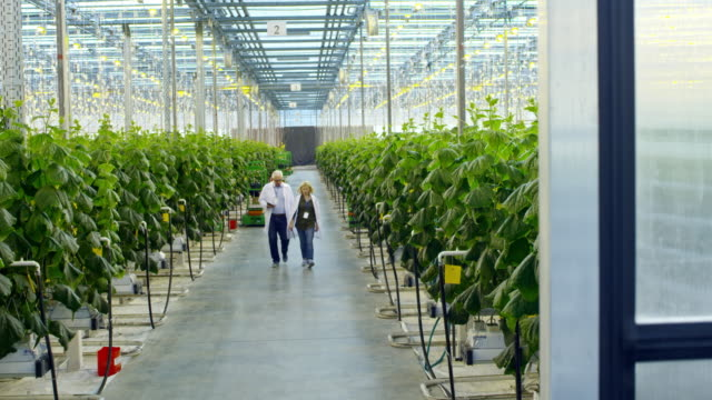 Crop Researchers Walking in Greenhouse