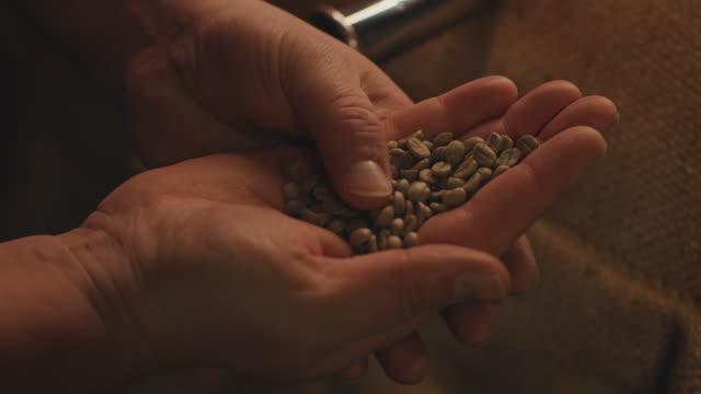 abgeschnittenes bild des besitzers, der rohe kaffeebohnen überprüft - rohe kaffeebohne stock-videos und b-roll-filmmaterial