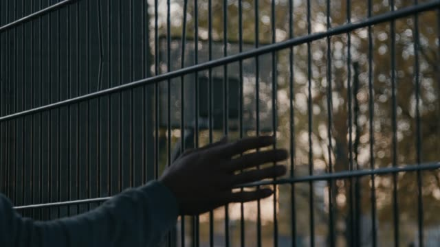 vídeos de stock e filmes b-roll de cropped video of basketball player touching fence - cercado