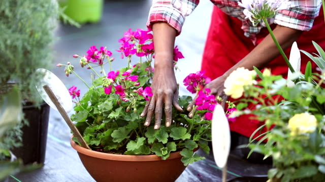 cropped view of woman working in garden center - semenzaio video stock e b–roll