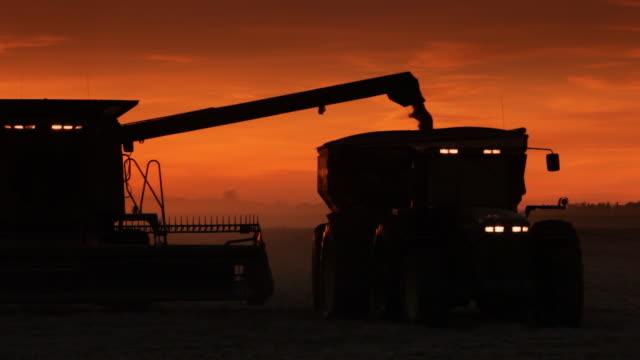 Crops gathered at dusk