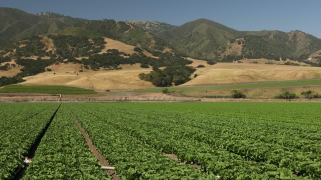 pflanzen wachsen auf fruchtbarem ackerland reif für die ernte - tal stock-videos und b-roll-filmmaterial
