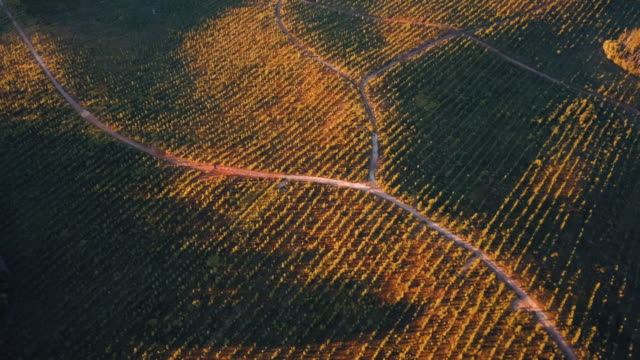 Crops In Line Formations With Roads In The Middle video