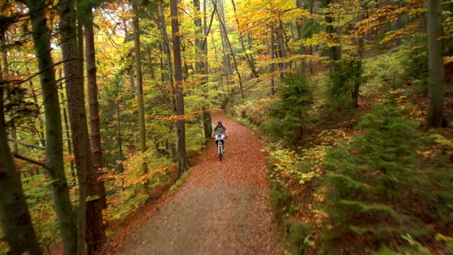 AERIAL: Cross country biker in autumn forest video