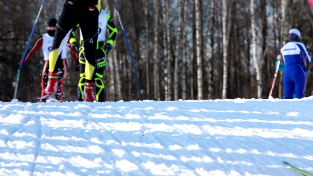 Cross-country skiing in winter forest. video