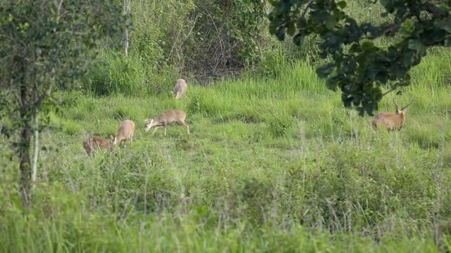 crowd of deer on twilight video
