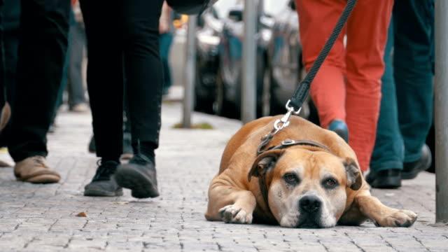 Menge von nicht gleichgültig Menschen auf der Straße vorbeifahren traurig, treuen Hund gebunden – Video