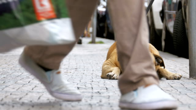 Crowd of Indifferent People on the Street Pass by Sad, Tied Faithful Dog video