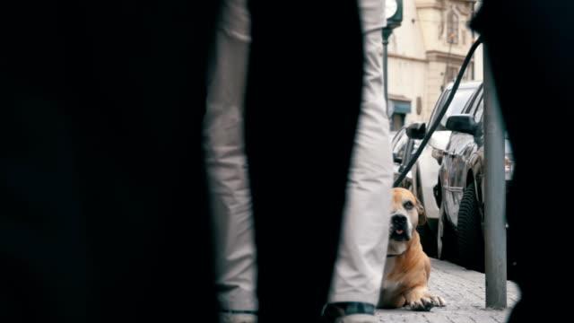 Menge von nicht gleichgültig Menschen auf der Straße vorbeifahren traurig, treuen Hund gebunden. Slow-Motion – Video