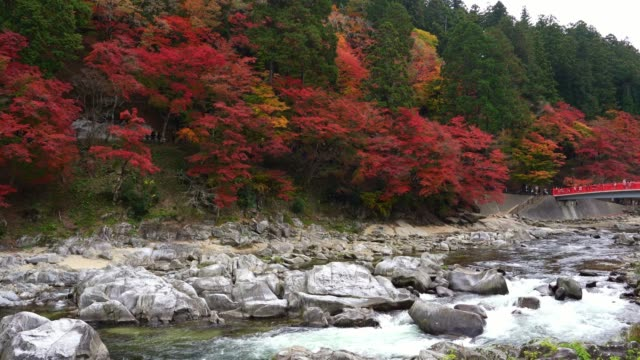 観光客の群衆は、香嵐渓渓谷、愛知県、中部地方で紅葉祭赤メープル色の赤い橋と滝とレッドブリッジでお楽しみいただけます。 - トヨタ点の映像素材/bロール