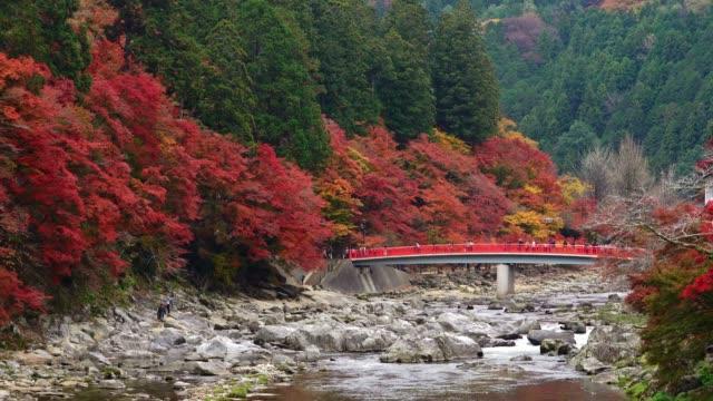 愛知県香南渓谷、中部地方の紅葉まつりでは、滝や赤い橋の上で観光客が楽しみます。 - トヨタ点の映像素材/bロール