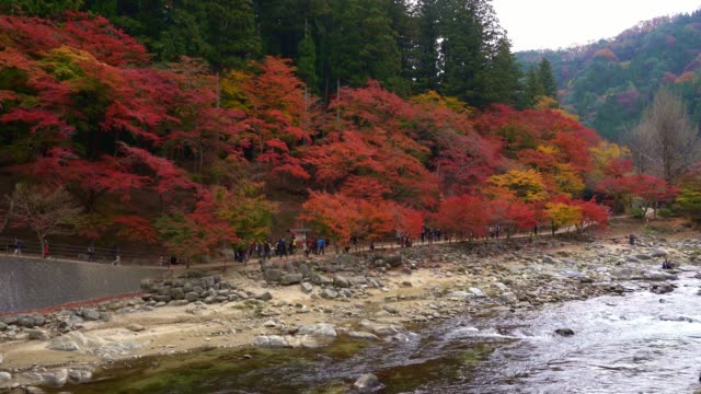 愛知県・中部地方の高安渓谷山で、赤いカエデの紅葉紅葉まつりを楽しむ観光客が訪れます。 - トヨタ点の映像素材/bロール