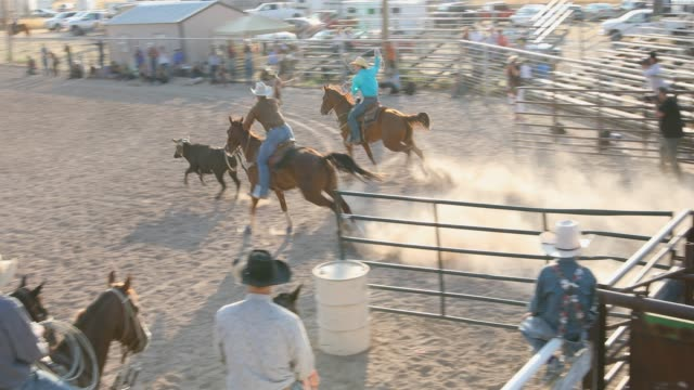 crowd on horseback watch the team roping event at a dusty rodeo - rodeo stock videos and b-roll footage