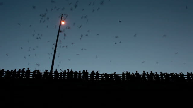 Crowds of people watch Mexican free-tailed bats Austin Texas video